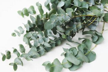 Kunst plant
